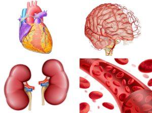 Все об артериальной гипертензии: классификация, причины и лечение