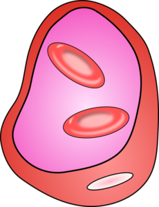 Гипертония: причины и предрасполагающие факторы