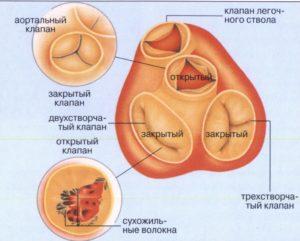 Все о приобретенных пороках сердца: виды, симптомы, диагностика и лечение